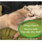 [Midoggy Blogparade] Hund im Bett – Nein oder etwa doch?