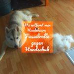 Wie entfernt man Hundehaare?