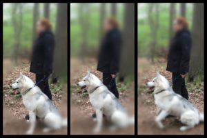 kommando still beim hund