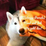 [miDoggy Parade] Hund und Job – Wie klappt das?