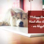 [Midoggy Parade] Hund allein daheim – wie klappt´s?