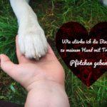 Wie stärke ich die Bindung zu meinem Hund mit Tricks – Pfötchen geben