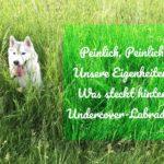 Das Undercover Labrador Team und seine Eigenheiten