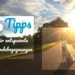 5 Tipps für entspannte Hundebegegnungen