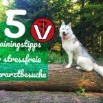 5 Trainingstipps für stressfreie Tierarztbesuche