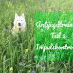 Antijagdtraining Teil 2