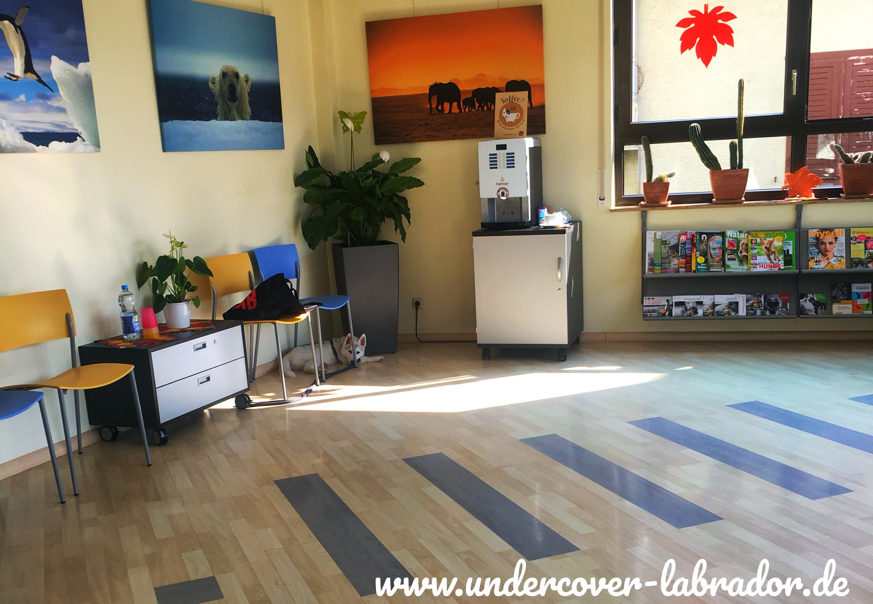 was tun wenn der hund einen giftk der gefressen hat undercover labrador. Black Bedroom Furniture Sets. Home Design Ideas