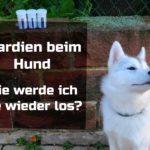 Giardien beim Hund – wie werde ich sie wieder los?