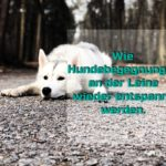 Wie Hundebegegnungen an der Leine wieder entspannt werden