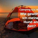Camping mit Hund – Wie gewöhne ich meinen Hund ans Zelt?