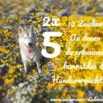 5er Doppel – 10 Zeichen an denen du erkennst das du Hundeverrückt bist