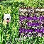 Midoggy Parade – Urlaub mit oder ohne Hund?