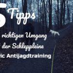 5 Tipps zum richtigen Umgang mit der Schleppleine – Basics Antijagdtraining