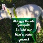 Midoggy Blogparade – Gassigehen – So findet euer Hund es wieder spannend