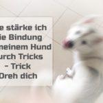 Wie stärke ich die Bindung zu meinem Hund durch Tricks – Trick Dreh dich