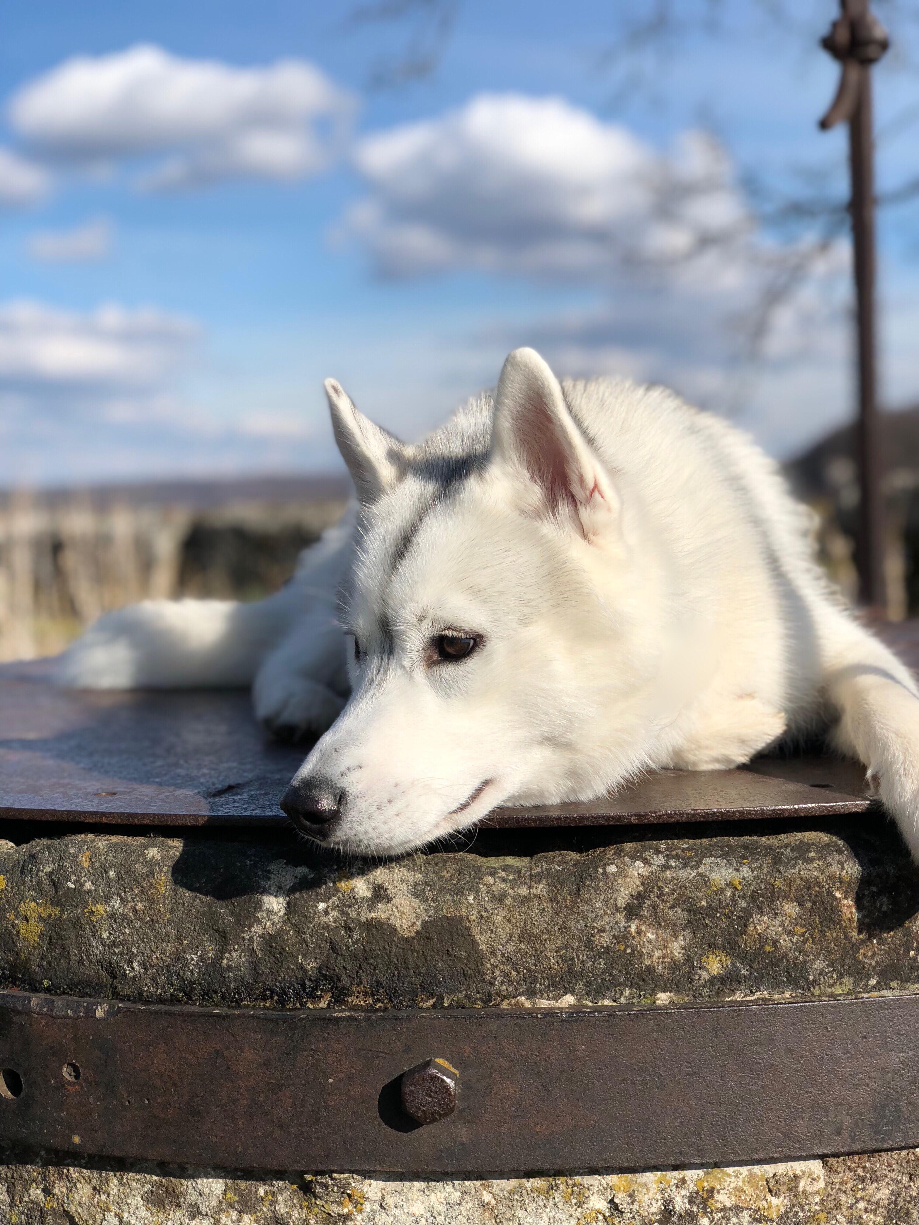 fr hjahrsputz so bleibt die wohnung auch mit hund sauber undercover labrador. Black Bedroom Furniture Sets. Home Design Ideas